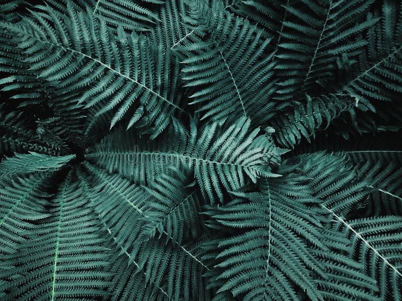 Πράσινη φτέρη στο θερινό δάσος στοκ φωτογραφία με δικαίωμα ελεύθερης χρήσης