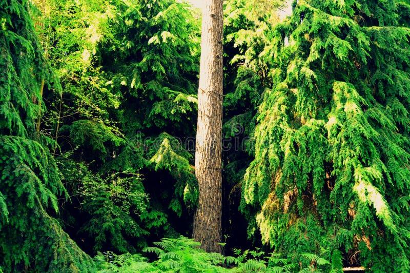 Πράσινη φύση τοπίου δασικών δέντρων στοκ φωτογραφία με δικαίωμα ελεύθερης χρήσης