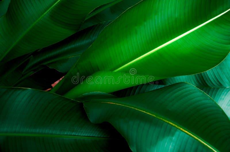 Πράσινη φύση φύλλων κινηματογραφήσεων σε πρώτο πλάνο για το υπόβαθρο Δημιουργικός φιαγμένος από πράσινα φύλλα δέντρων στοκ εικόνα με δικαίωμα ελεύθερης χρήσης