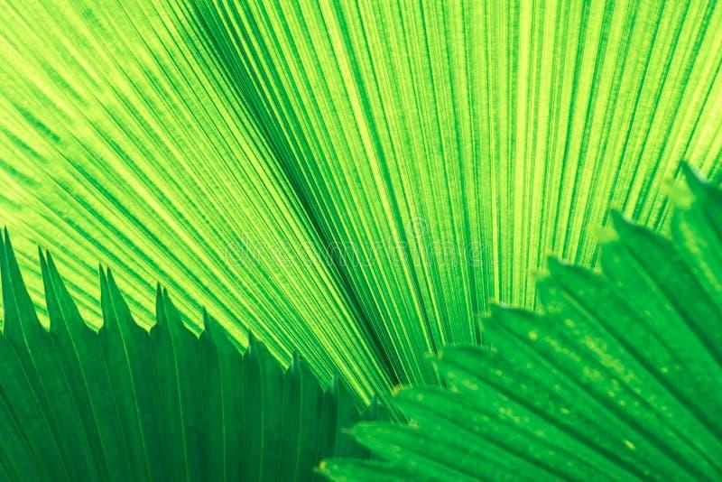 Πράσινη φύση φύλλων κινηματογραφήσεων σε πρώτο πλάνο για το υπόβαθρο Δημιουργικός φιαγμένος από πράσινα φύλλα δέντρων στοκ εικόνα