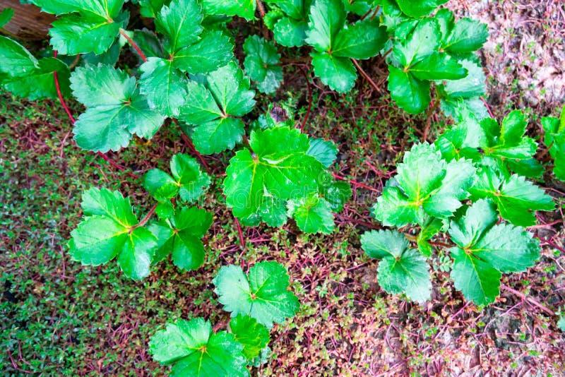 Πράσινη φύση φύλλων κινηματογραφήσεων σε πρώτο πλάνο για το υπόβαθρο Δημιουργικός φιαγμένος από πράσινα φύλλα δέντρων στοκ εικόνες