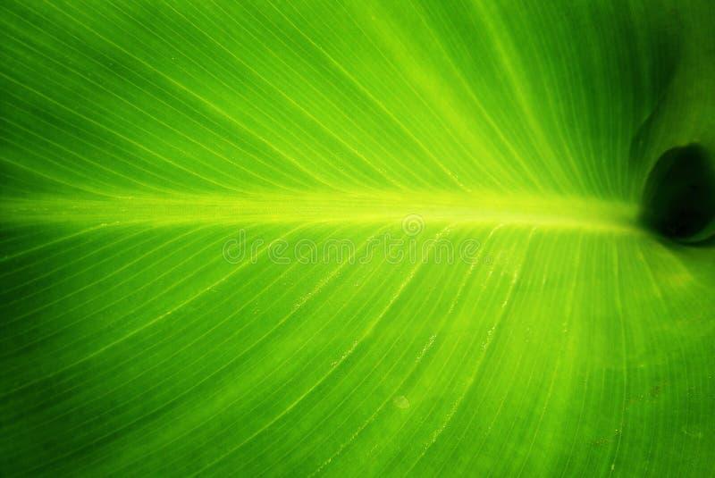 Download πράσινη φύση φύλλων στοκ εικόνες. εικόνα από καθαρίστε - 13181644