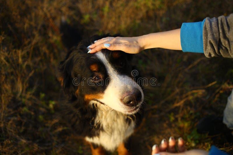 Χέρι προσώπων που κρατά ένα κεφάλι σκυλιών Πράσινη χλόη και κίτρινο υπόβαθρο στοκ φωτογραφία