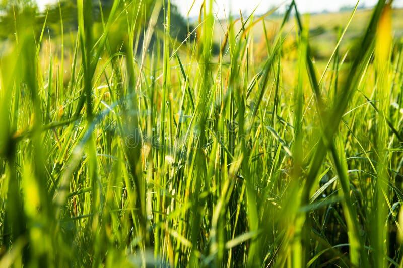 Πράσινη χλόη με τις πτώσεις δροσιάς Εικόνα υποβάθρου στοκ φωτογραφία