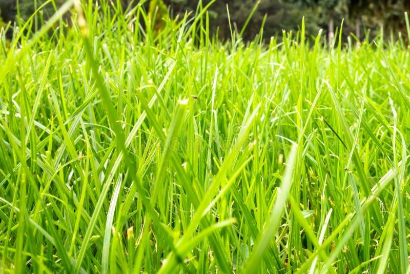 Πράσινη χλόη με το δάσος στο υπόβαθρο σε μια φωτεινή ηλιόλουστη ημέρα στοκ φωτογραφία