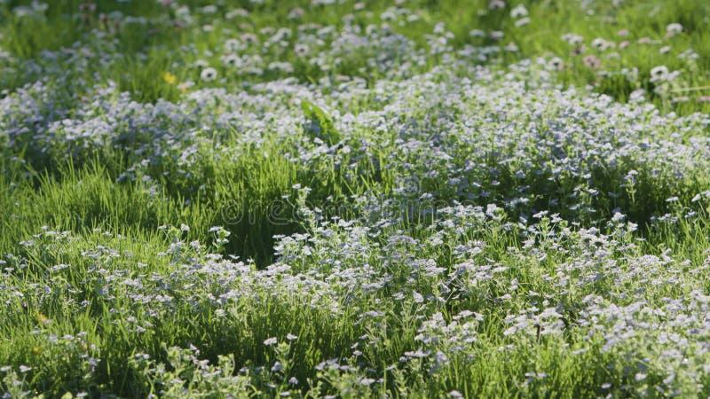 Πράσινη χλόη με το μπλε υπόβαθρο λουλουδιών στοκ φωτογραφία με δικαίωμα ελεύθερης χρήσης