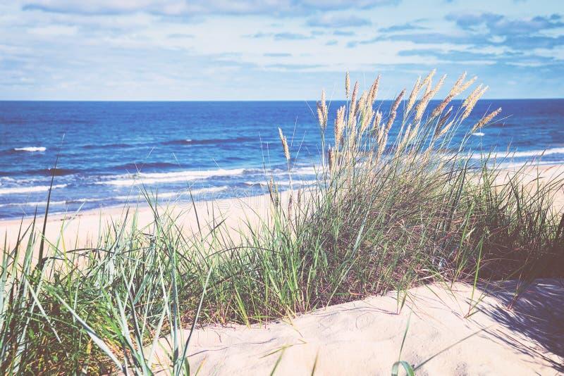 Πράσινη χλόη στον αμμόλοφο άμμου στη θάλασσα της Βαλτικής στο θέρετρο  στοκ εικόνα
