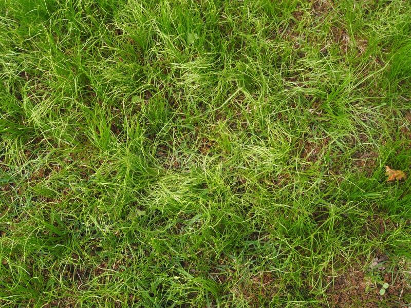 Πράσινη χλόη στον κήπο στοκ εικόνες