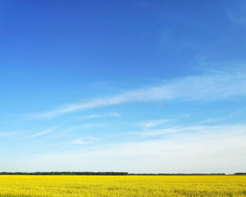 Πράσινη χλόη τομέων ενάντια σε έναν μπλε ουρανό και ένα ηλιοβασίλεμα στοκ εικόνες