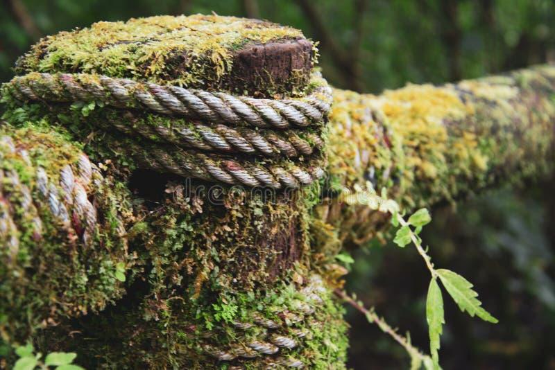 Πράσινη χλόη του Μπόρνεο, του υγρών σχοινιού και της φτέρης στοκ εικόνες
