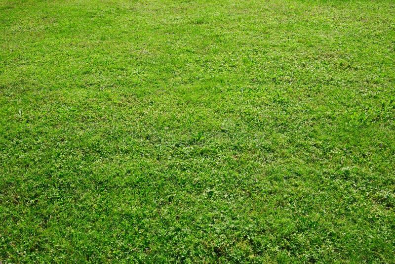 Πράσινη χλόη, φυσικό υπόβαθρο σύστασης τομέων στοκ εικόνα με δικαίωμα ελεύθερης χρήσης