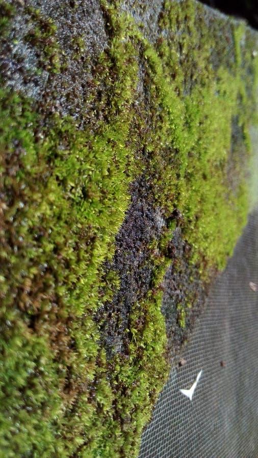Πράσινη χλόη στοκ εικόνα