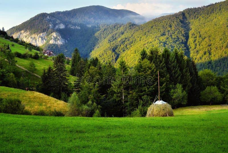 Πράσινη χοάνη στοκ φωτογραφία με δικαίωμα ελεύθερης χρήσης