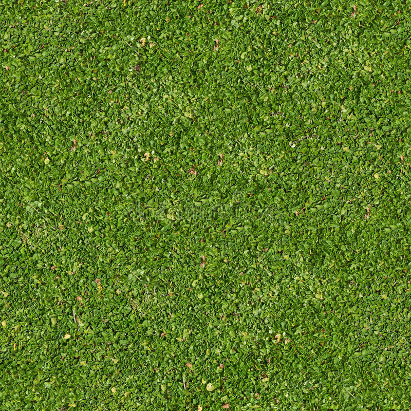 Πράσινη χλόη. Άνευ ραφής σύσταση Tileable. στοκ φωτογραφίες με δικαίωμα ελεύθερης χρήσης