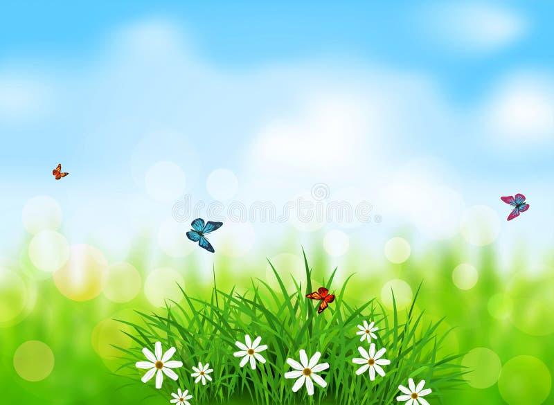 Πράσινη χλόη με τα άσπρα λουλούδια, πεταλούδες σε ένα ελατήριο, λιβάδι, διανυσματική απεικόνιση