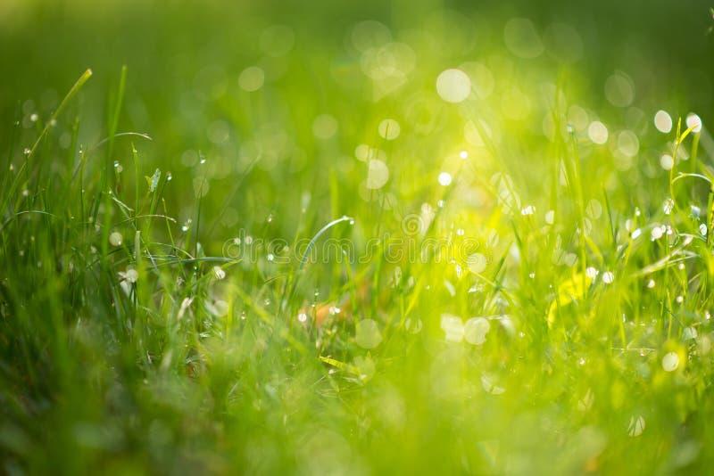 Πράσινη χλόη με τη δροσιά στο φως του ήλιου στοκ εικόνα με δικαίωμα ελεύθερης χρήσης