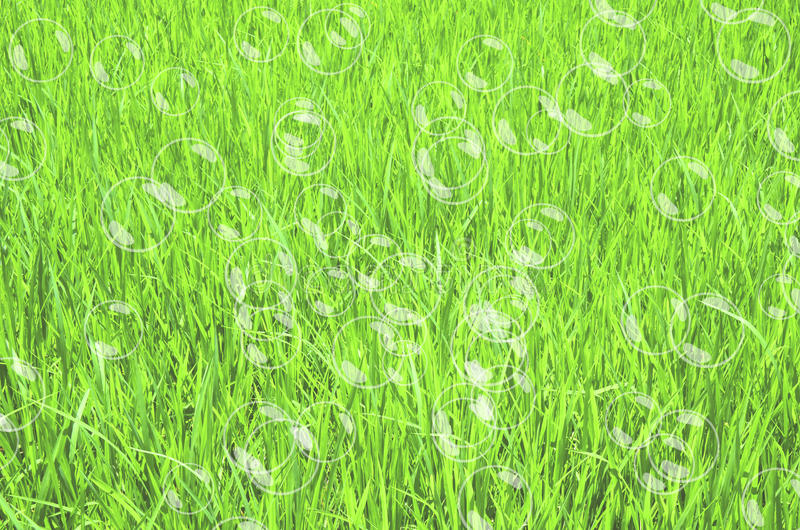 Πράσινη χλόη με τις φυσαλίδες ελεύθερη απεικόνιση δικαιώματος