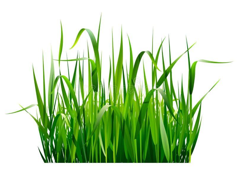 Πράσινη χλόη ελεύθερη απεικόνιση δικαιώματος