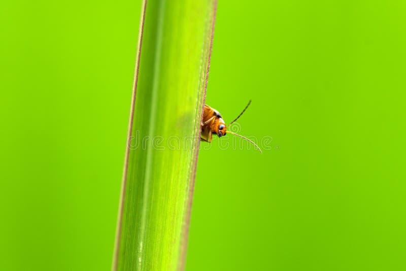 Πράσινη χλόη behide ζωύφιου στοκ εικόνα με δικαίωμα ελεύθερης χρήσης