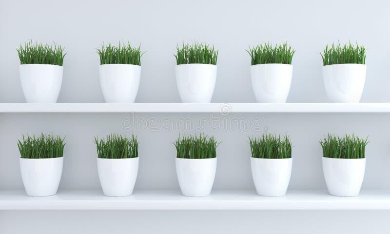 Πράσινη χλόη flowerpots διανυσματική απεικόνιση