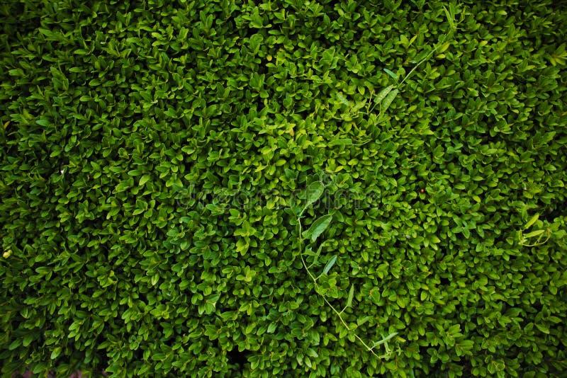 Πράσινη όμορφη ταπετσαρία στοκ φωτογραφίες με δικαίωμα ελεύθερης χρήσης