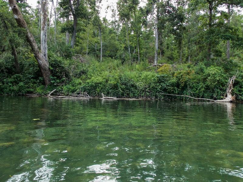 Πράσινη όχθη ποταμού στοκ εικόνες
