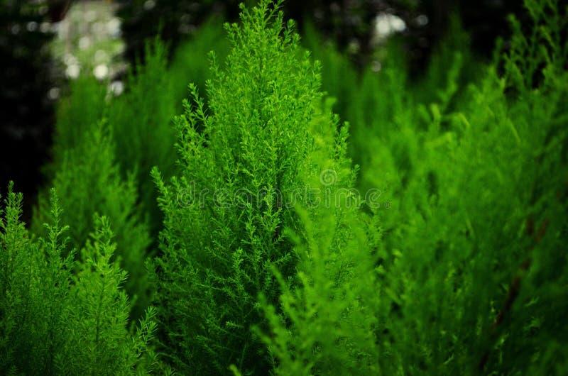 πράσινη όψη στοκ εικόνα με δικαίωμα ελεύθερης χρήσης