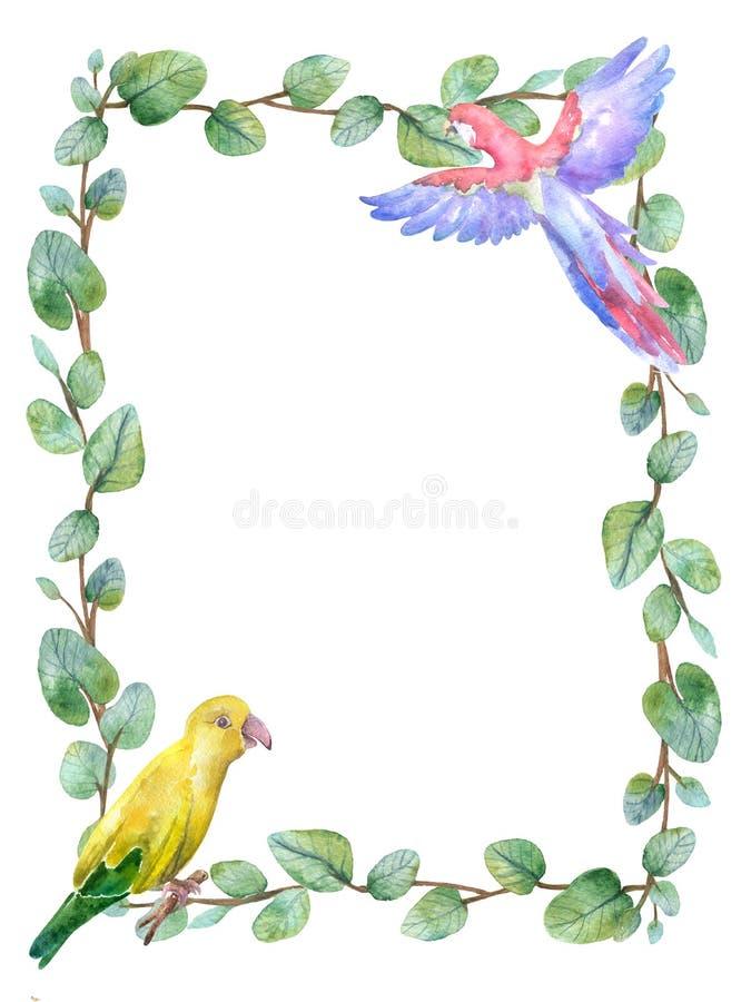 Πράσινη floral κάρτα πλαισίων Watercolor με τα ασημένια στρογγυλά φύλλα ευκαλύπτων δολαρίων απεικόνιση αποθεμάτων