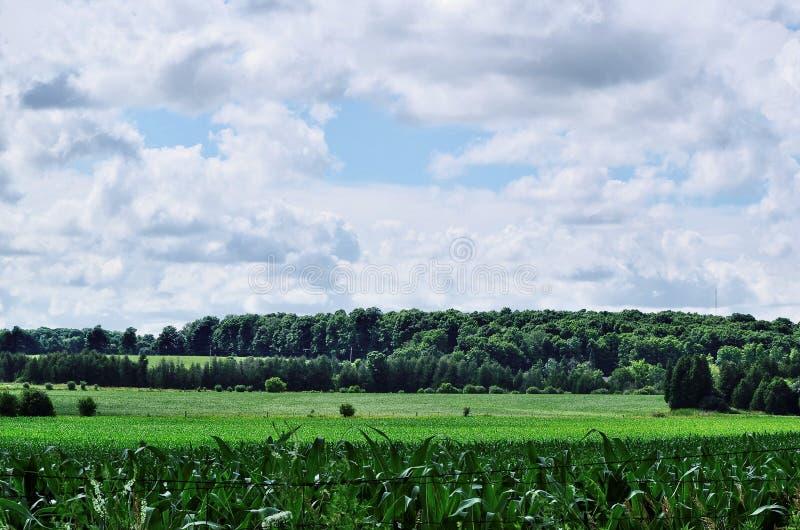 Πράσινοι αγροτικοί τομέας και δάσωση με τον ουρανό και τα σύννεφα στοκ εικόνες
