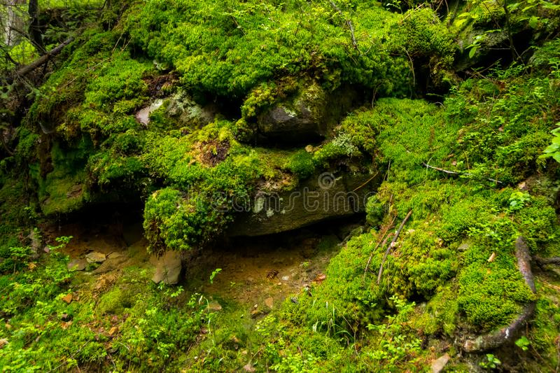 Πράσινοι βρύο, ρίζες και βράχοι στοκ εικόνες