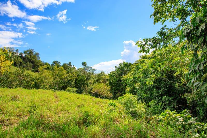 Πράσινοι ζούγκλα και μπλε ουρανός στα βουνά Puerto Plata, Domi στοκ φωτογραφία με δικαίωμα ελεύθερης χρήσης