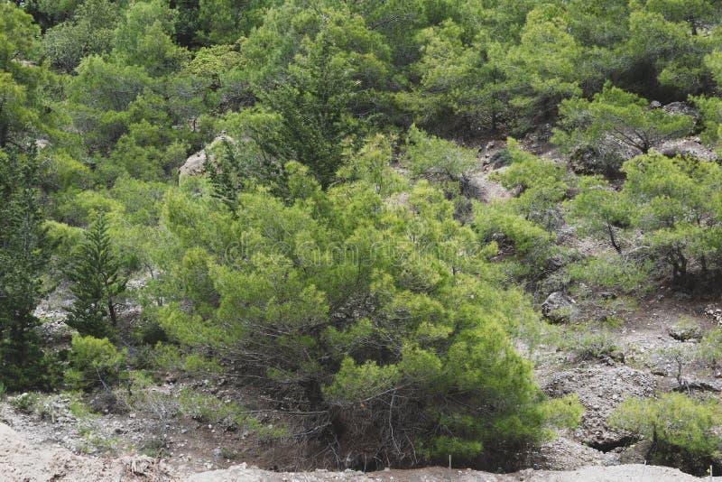 Πράσινοι θάμνοι mountainside στοκ εικόνα
