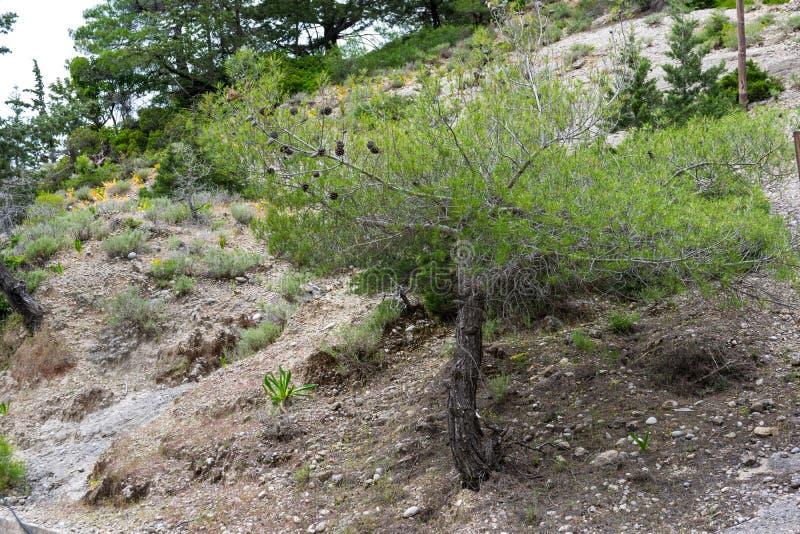 Πράσινοι θάμνοι mountainside στοκ φωτογραφίες