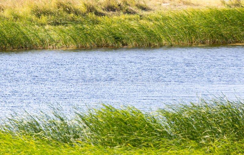 Πράσινοι κάλαμοι στη λίμνη υπαίθρια στοκ φωτογραφία με δικαίωμα ελεύθερης χρήσης