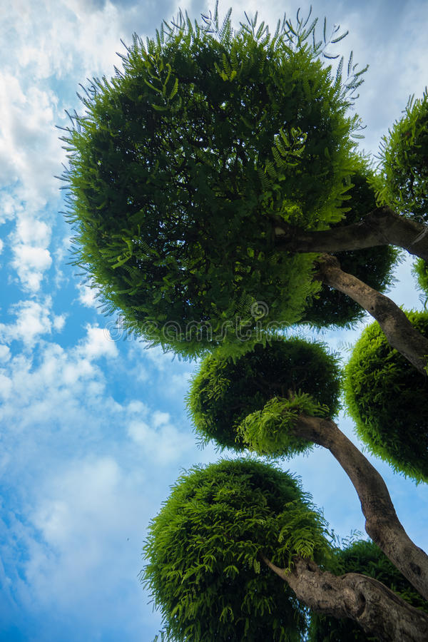 Πράσινοι κήποι δέντρων μπονσάι σε Wat Arun, Μπανγκόκ στοκ φωτογραφία με δικαίωμα ελεύθερης χρήσης