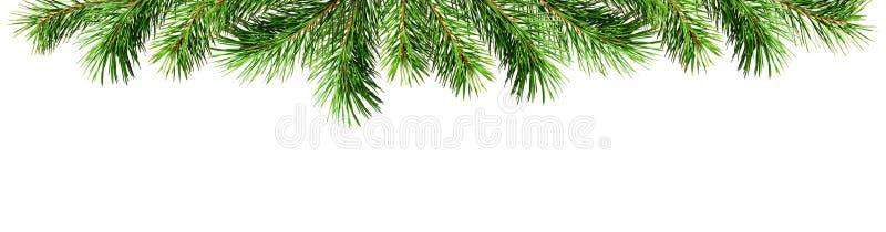 Πράσινοι κλαδίσκοι πεύκων για τα τοπ σύνορα Χριστουγέννων στοκ φωτογραφίες με δικαίωμα ελεύθερης χρήσης