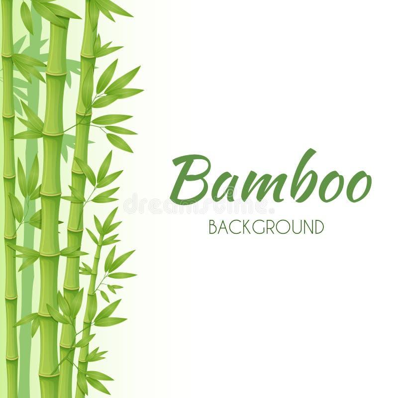 Πράσινοι μίσχοι μπαμπού με τα πράσινα φύλλα σε ένα άσπρο υπόβαθρο r ελεύθερη απεικόνιση δικαιώματος