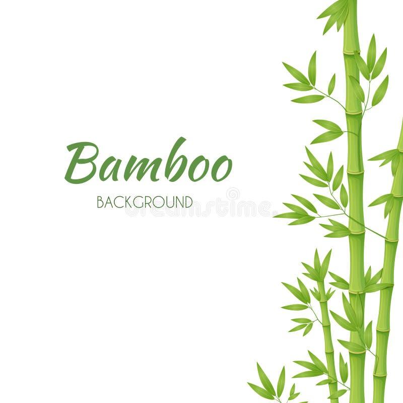 Πράσινοι μίσχοι μπαμπού με τα πράσινα φύλλα σε ένα άσπρο υπόβαθρο r διανυσματική απεικόνιση