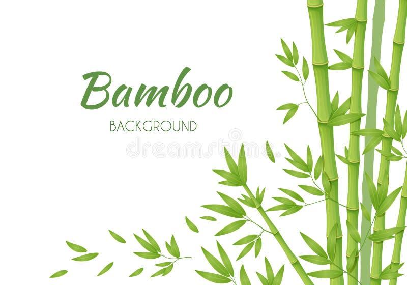 Πράσινοι μίσχοι μπαμπού με τα πράσινα φύλλα σε ένα άσπρο υπόβαθρο ελεύθερη απεικόνιση δικαιώματος