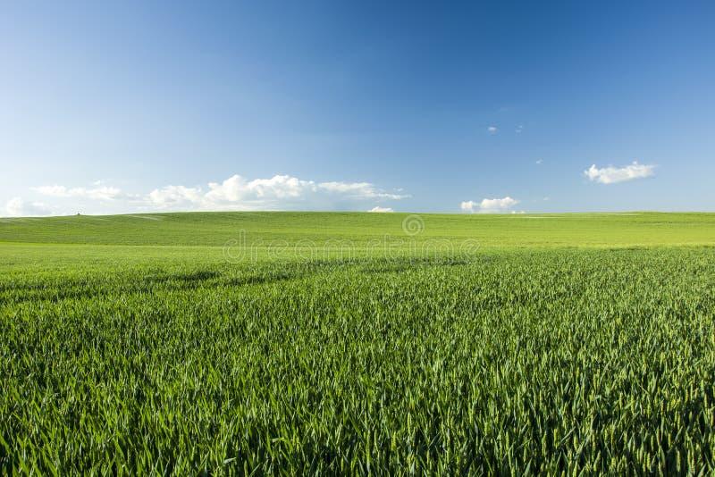 Πράσινοι μεγάλοι τομέας και μπλε ουρανός στοκ εικόνες με δικαίωμα ελεύθερης χρήσης