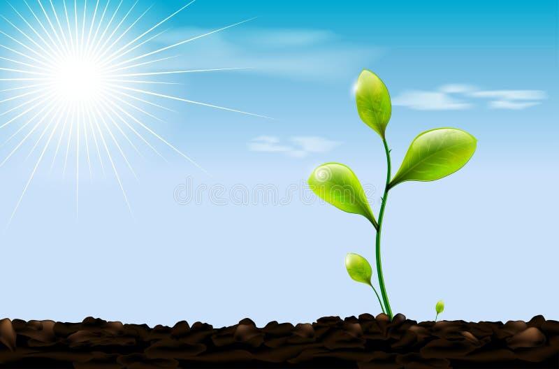 Πράσινοι νεαρός βλαστός, χώμα και μπλε ουρανός με τον ήλιο διανυσματική απεικόνιση