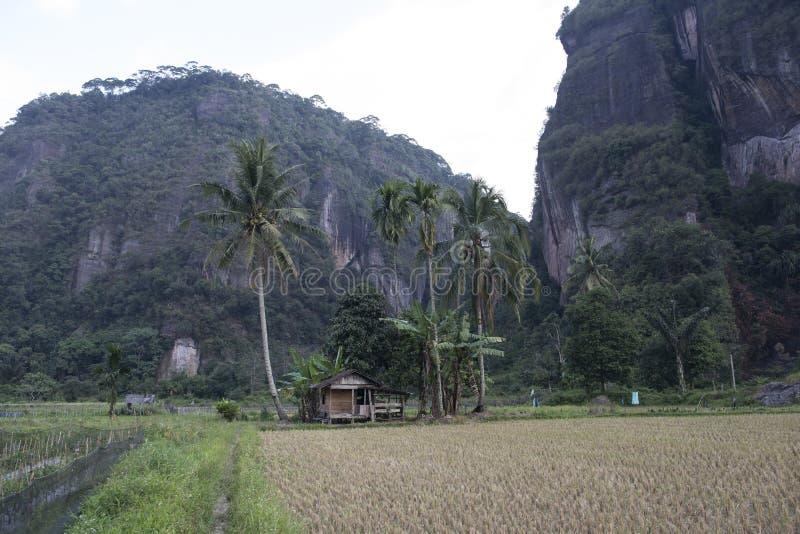 Πράσινοι ορυζώνες ρυζιού sumatra στοκ φωτογραφία με δικαίωμα ελεύθερης χρήσης