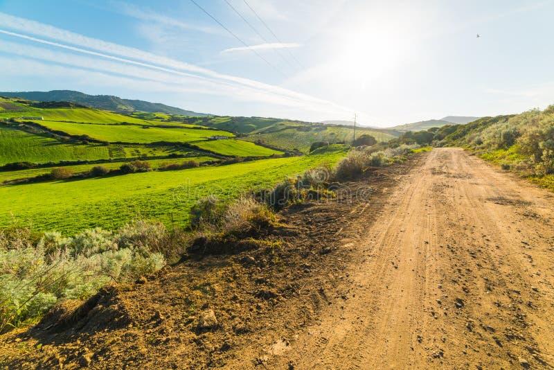 Πράσινοι τομέας και βρώμικος δρόμος στη Σαρδηνία στοκ εικόνα με δικαίωμα ελεύθερης χρήσης