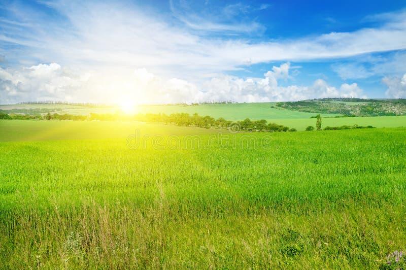 Πράσινοι τομέας και μπλε ουρανός με τα ελαφριά σύννεφα Επάνω από τον ορίζοντα είναι στοκ εικόνα με δικαίωμα ελεύθερης χρήσης