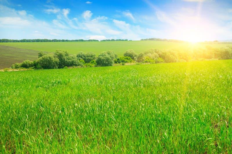 Πράσινοι τομέας και μπλε ουρανός με τα ελαφριά σύννεφα Επάνω από τον ορίζοντα είναι μια φωτεινή ανατολή στοκ εικόνες
