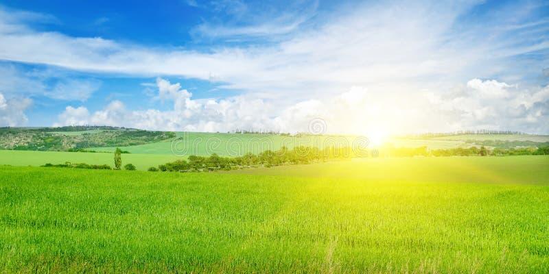 Πράσινοι τομέας και μπλε ουρανός με τα ελαφριά σύννεφα Επάνω από τον ορίζοντα είναι μια φωτεινή ανατολή Ευρεία φωτογραφία στοκ εικόνα με δικαίωμα ελεύθερης χρήσης