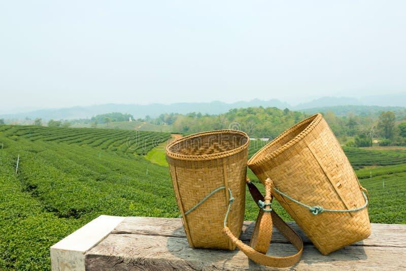 Πράσινοι τομέας τσαγιού και καλάθι μπαμπού στοκ φωτογραφίες