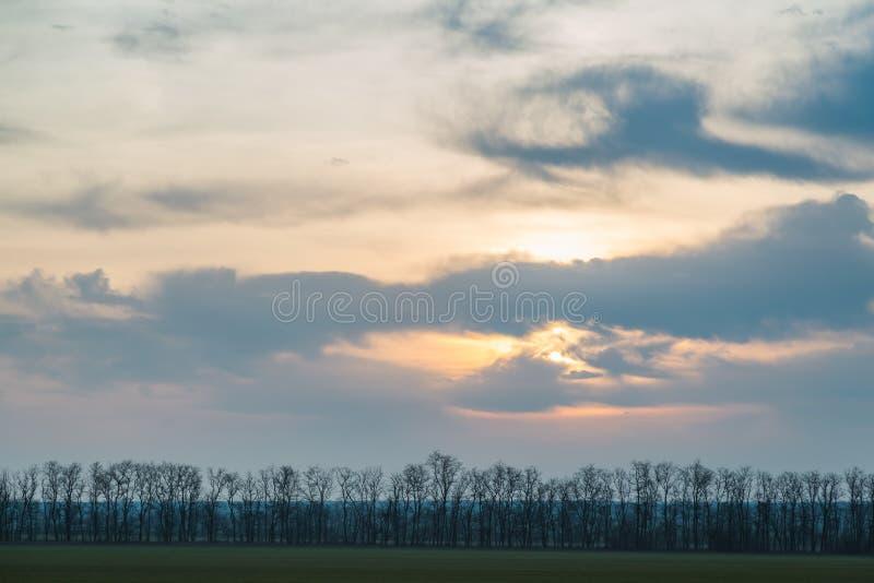 Πράσινοι τομείς, μια σειρά των δέντρων ενάντια σε ένα σκηνικό των όμορφων σύννεφων στην αυγή την άνοιξη διάστημα αντιγράφων στοκ εικόνα