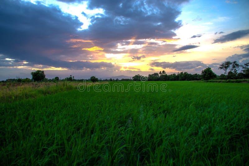 Πράσινοι τομείς ρυζιού με το ηλιοβασίλεμα πέρα από το βουνό το βράδυ, στοκ εικόνες
