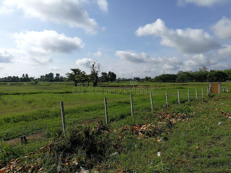 Πράσινοι τομείς στοκ φωτογραφία